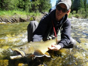 Nice Bull Trout